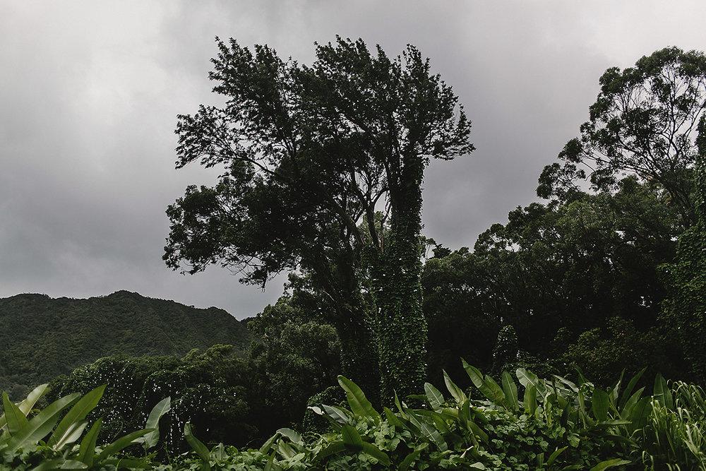 hawaii_-68.jpg