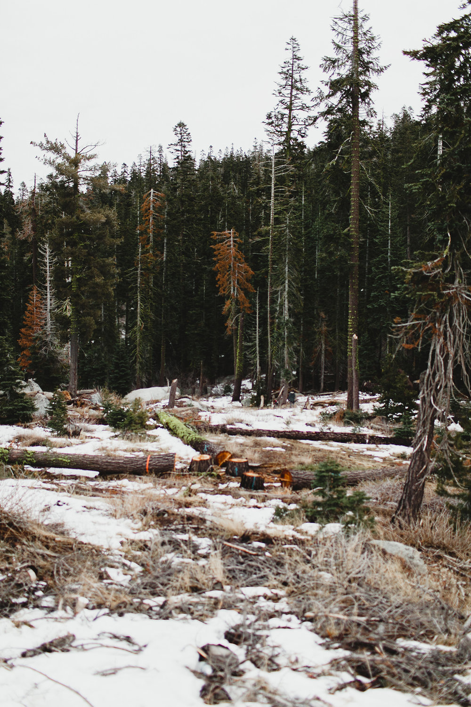 lake_tahoe_-14.jpg