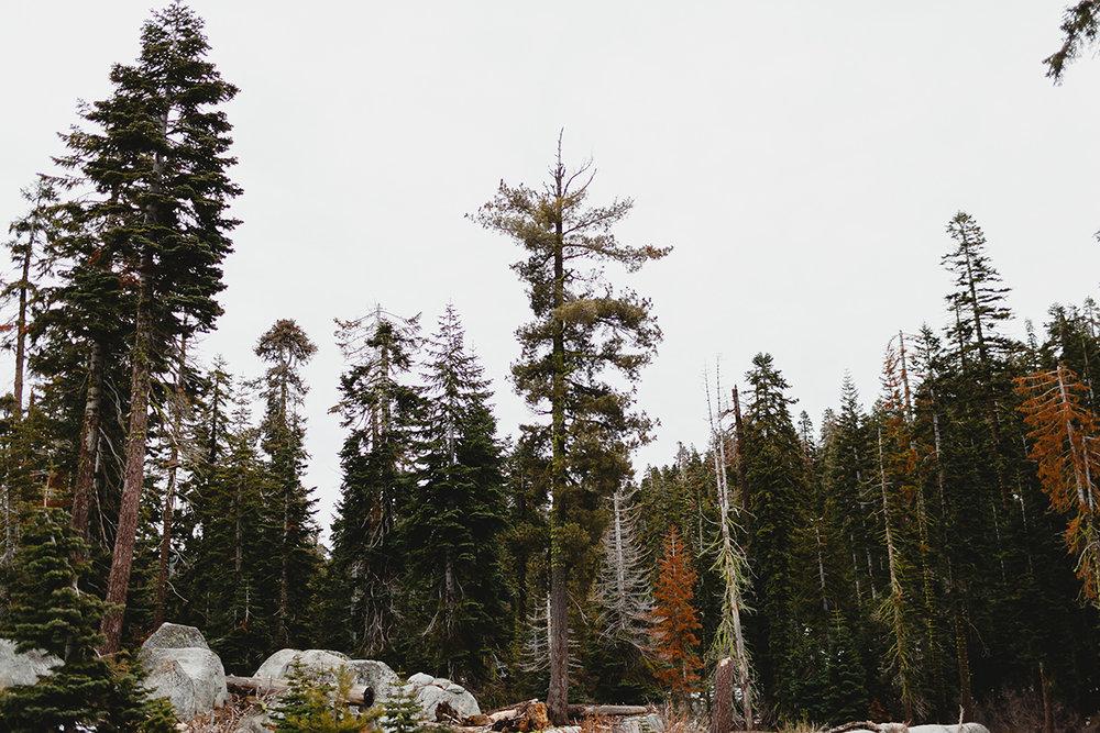 lake_tahoe_-22.jpg
