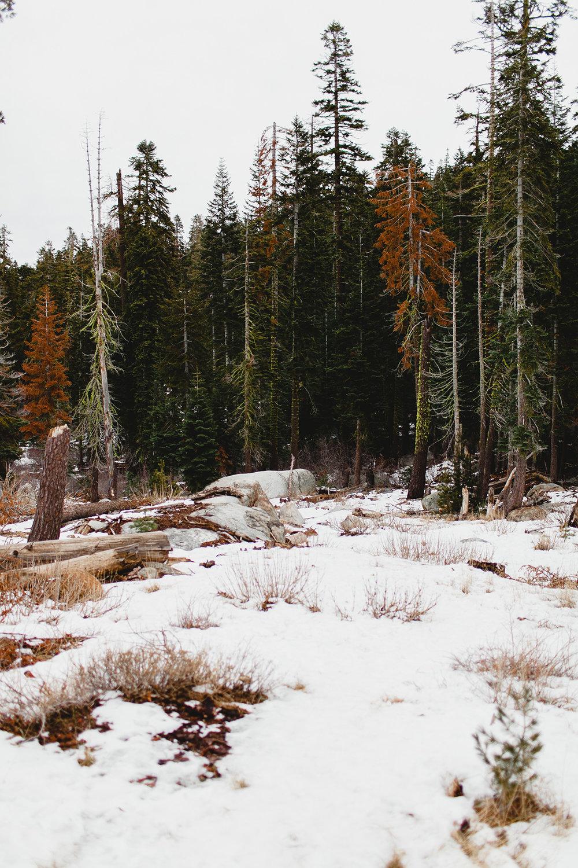 lake_tahoe_-23.jpg
