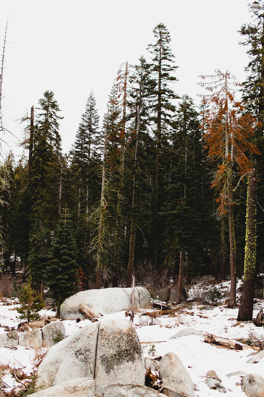 lake_tahoe_-26.jpg