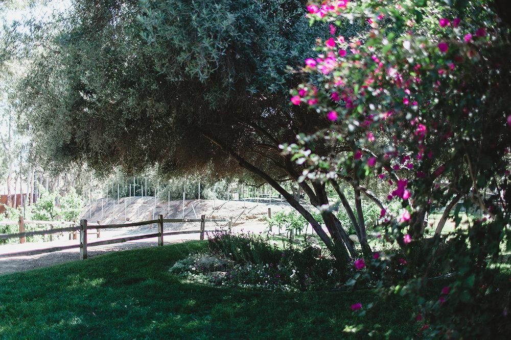 jas_theo_lakeoak_meadows_wedding_-025.jpg