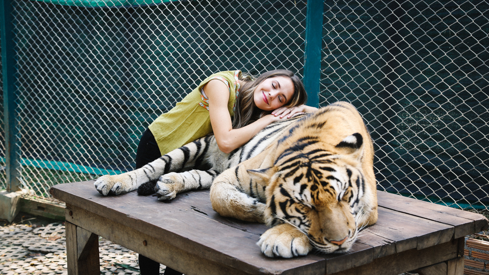 tigre-2.jpg