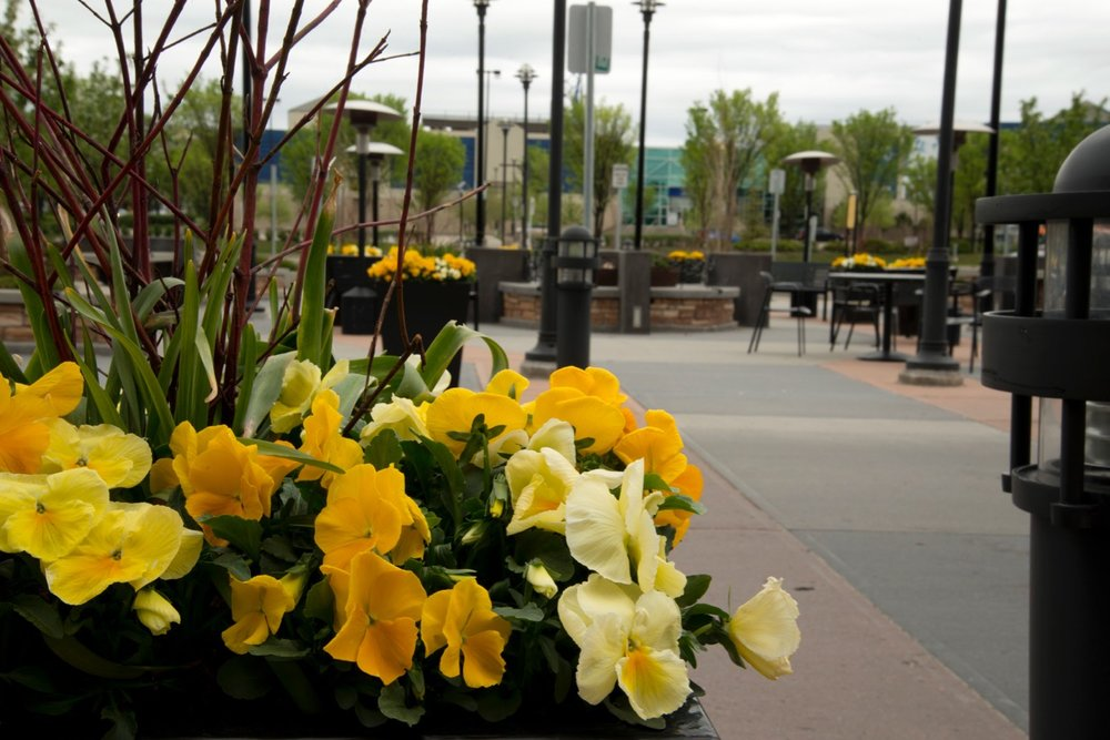 Spring Planters - Although Calgary's spring is short, well-placed early colour is welcoming.