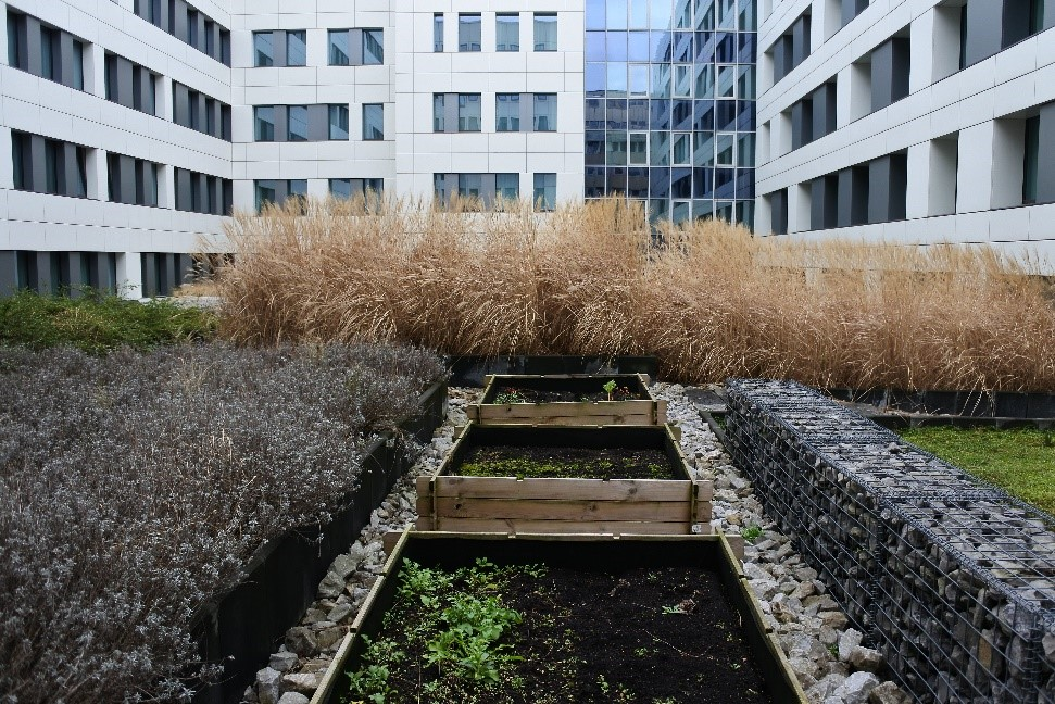 The green roof of the Thon EU hotel with lavender, poaceae and the vegetable garden. (Picture by E. Uskokovic)