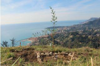 Mon Arbre à Moi - A story of reforestation