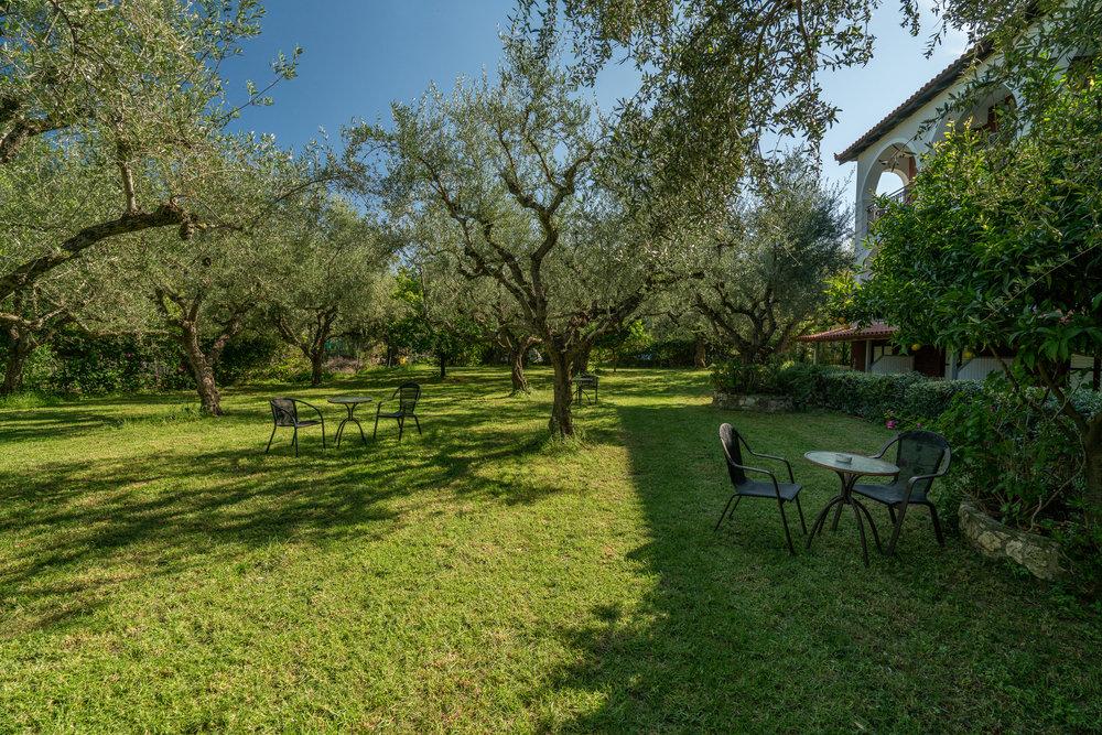 Olive Grove- Garden2.jpg