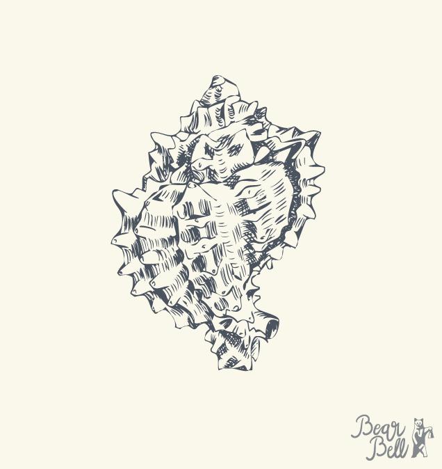 Bear-Bell_Illustration_Seashell03.png