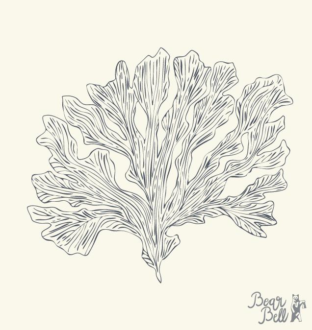 Illustrationer_Seaweed.png