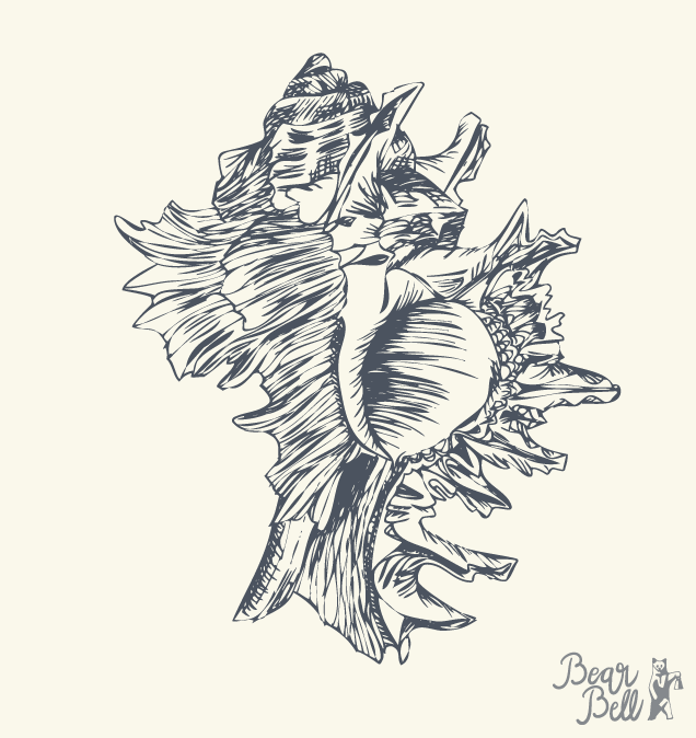 Illustrationer_Seashell02.png