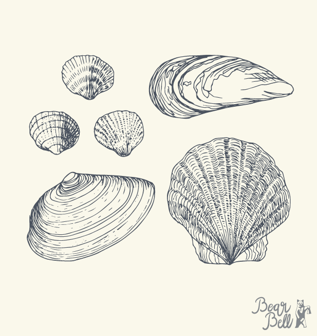 Bear-Bell_Illustration_Seashell-collage.png