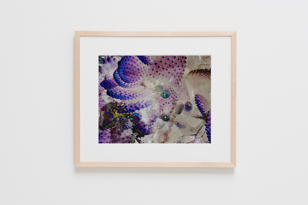 Purple Cactus — EVENTIDE COLLECTIVE