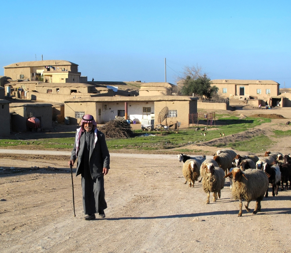 A shepherd with his goats in a Syrian village recently freed from ISIS control. ©Ruth Pollard 2015