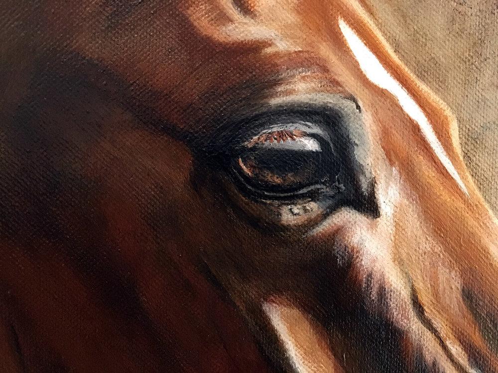 Pferdeportrait_doppel_detail_Auge.jpg