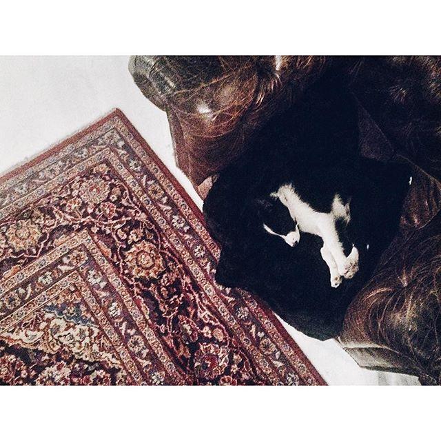 Säg hej till Penny! 👋🏻 Världens snällaste och finaste studiohund som kommer och sover i vår fåtölj lite då och då 🐶💤 #studiodog #studiolundberg #rentalstudio #hyrstudio #kvarngatan #photostudio #södermalm #stockholm
