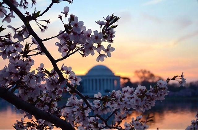 Who's ready for the Cherry Blossom Festival? #letsgoDC #cherryblossomfestival #2018 #weatherbegood #springiscoming #dc #gotravel #goexplore #goglamgurl #new #newpost #festival #photography #videopro #like4like #like #commentforcomment #comment #followforfollow #follow #spamforspam #spam