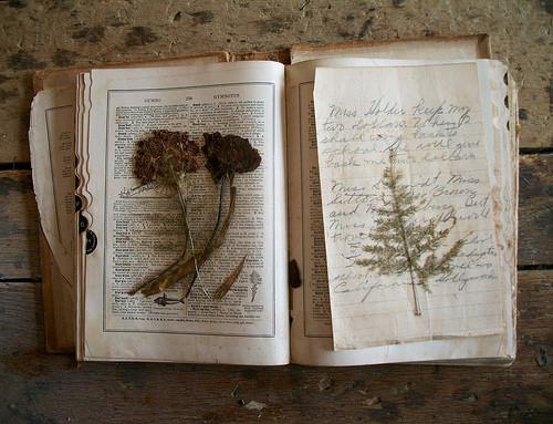 book,flower,herbarium,witchcraft-5a40d653716a388d4df1934c48fe1196_h.jpg
