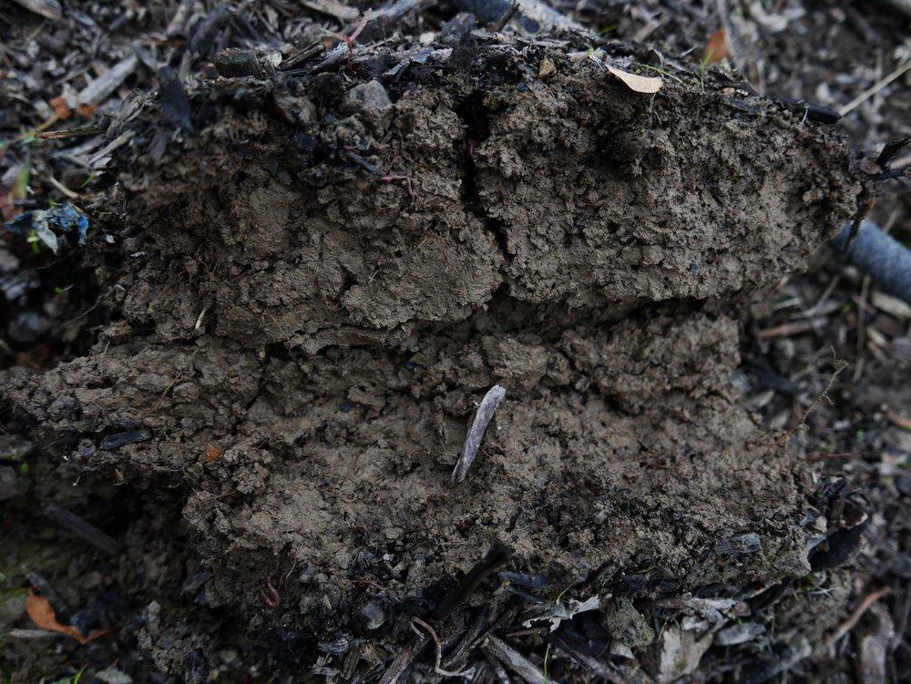 """For å finne ut hva slags jordsmonn du ha der du bor kan du ta """"rulletesten"""" på jorda di. Dersom du kan rulle en pølse av litt fuktig jord i hagen din har du typisk leirjord i følge Ida. Det er den mest utbredte jordtypen sentralt på østlandet."""