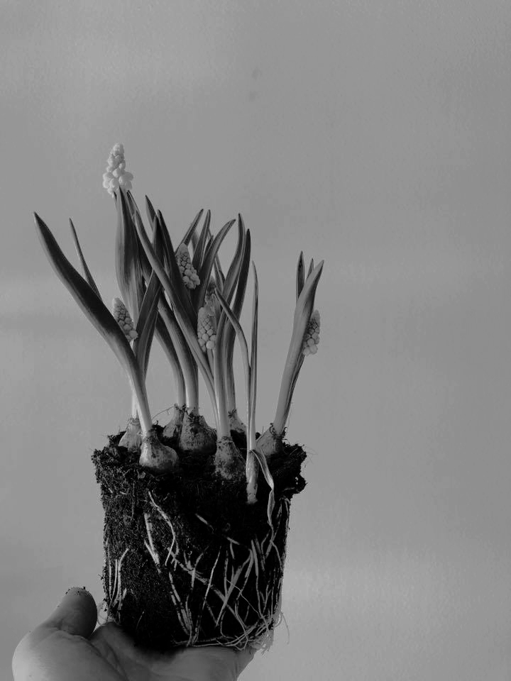 Foto: Passiflora