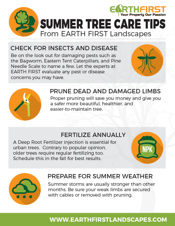 Summer-tree-tips-web.jpg