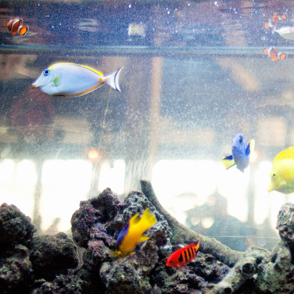 Hilton Head Island's Largest Saltwater Aquarium