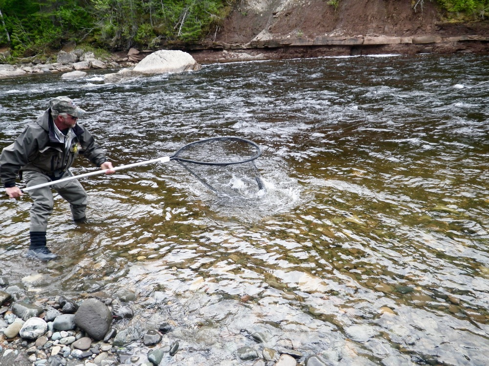 Salmon Lodge guide Larry Dee nets one for his client!