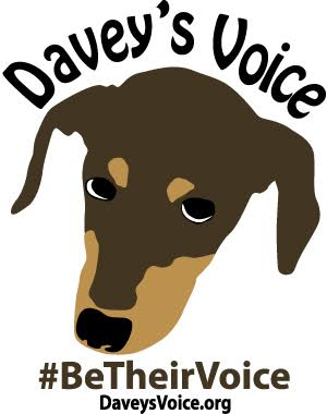 The Fluffball   Davey's Voice