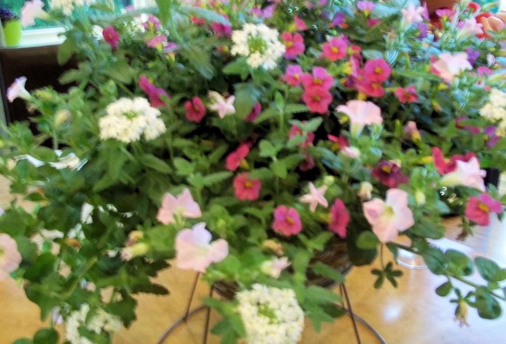 Cellini flowers.jpg