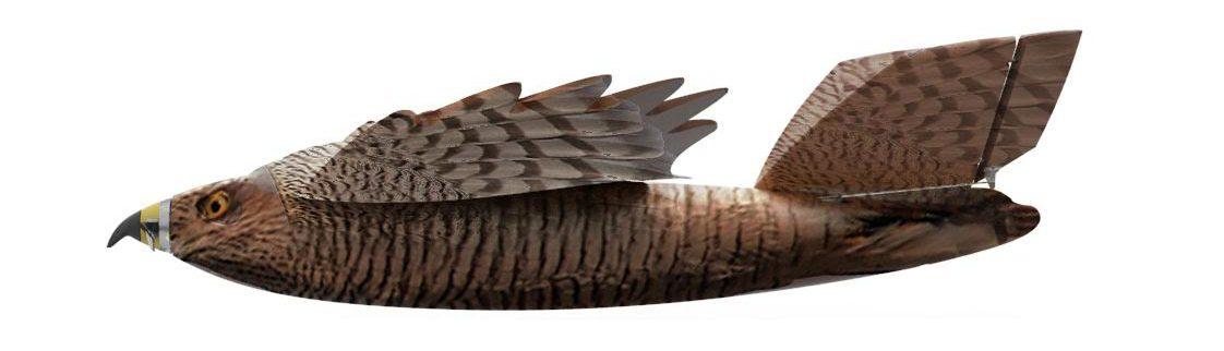 falkman-bird