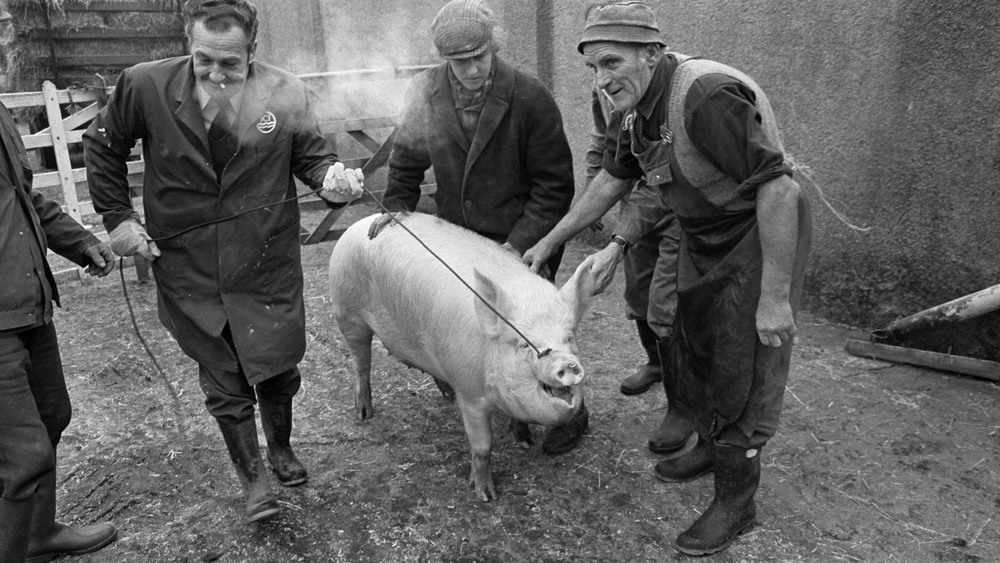Gargrave, N.Yorkshire: Old Farm, Little Stainton, Cyril