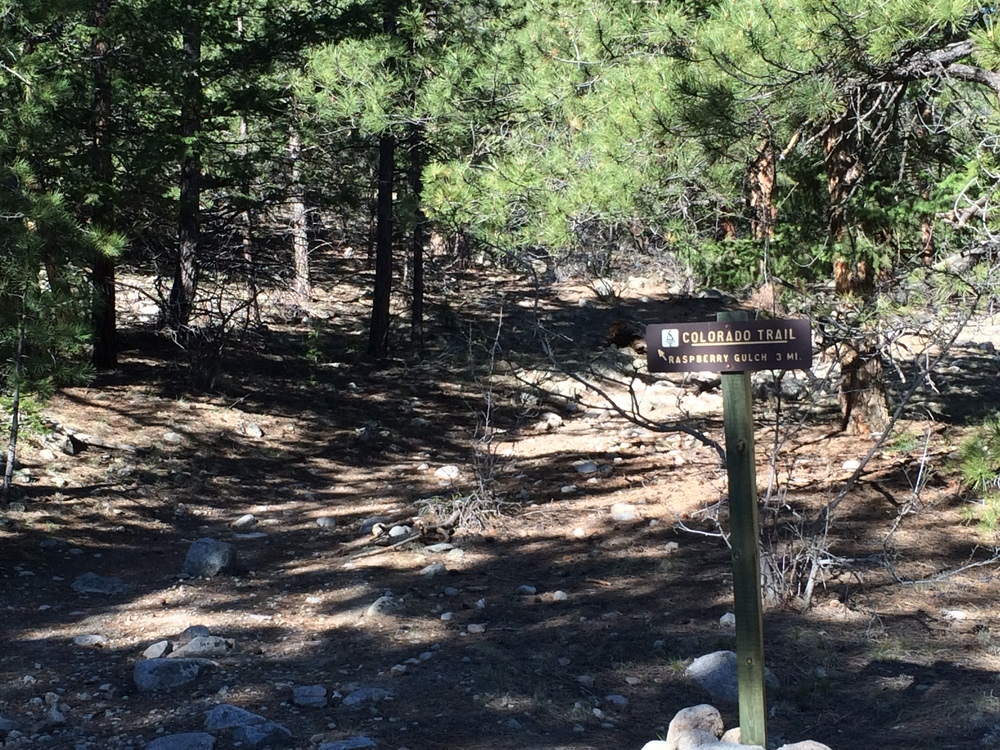 Sign for Raspberry gulch - Segment 14 Colorado Trail. (Near chaffee co rd 290)