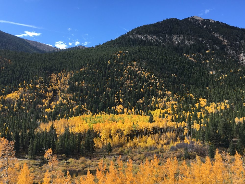 Changing leaves above rainbow lake - Cottonwood pass