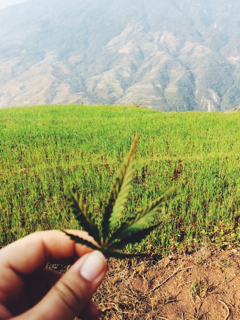 L'eagle - organic weed