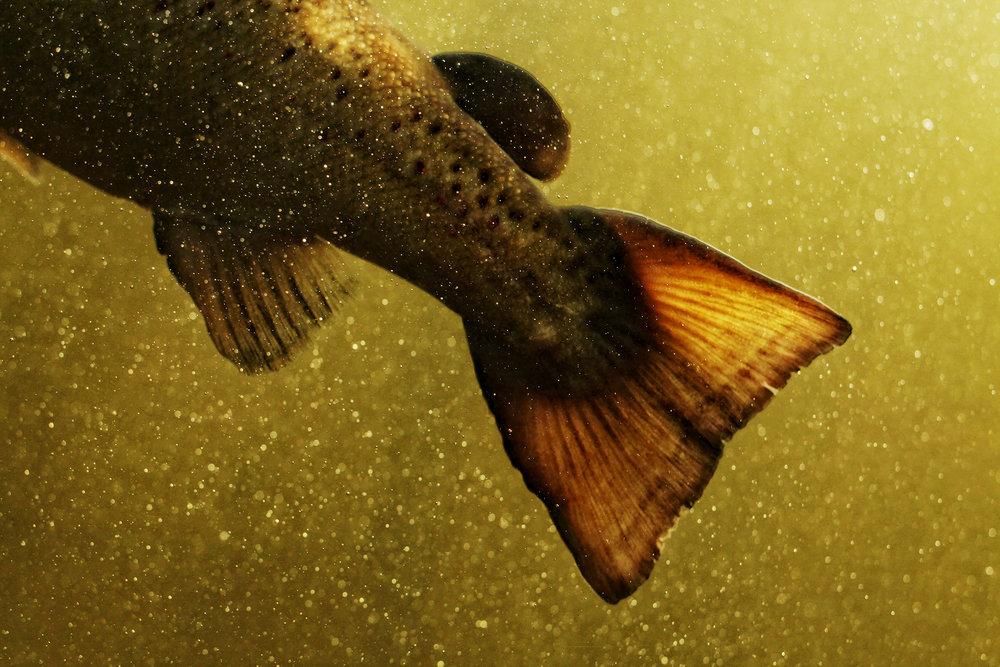 barnes-salmon-photo-8x12-400.jpg