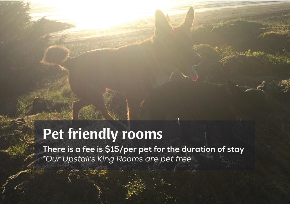 petfriendlyrooms.jpg