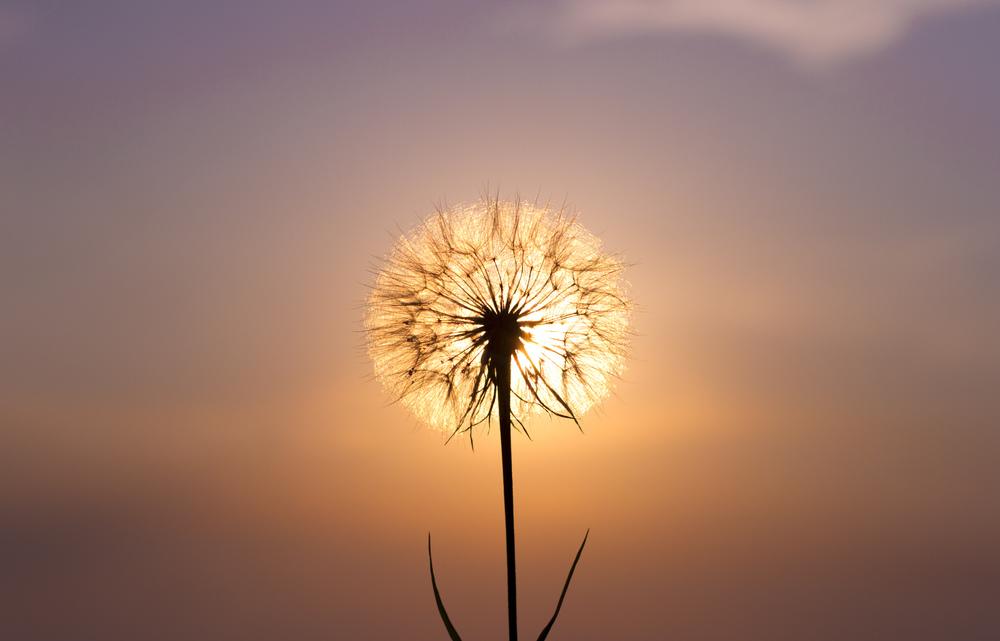 Wish flower.jpg