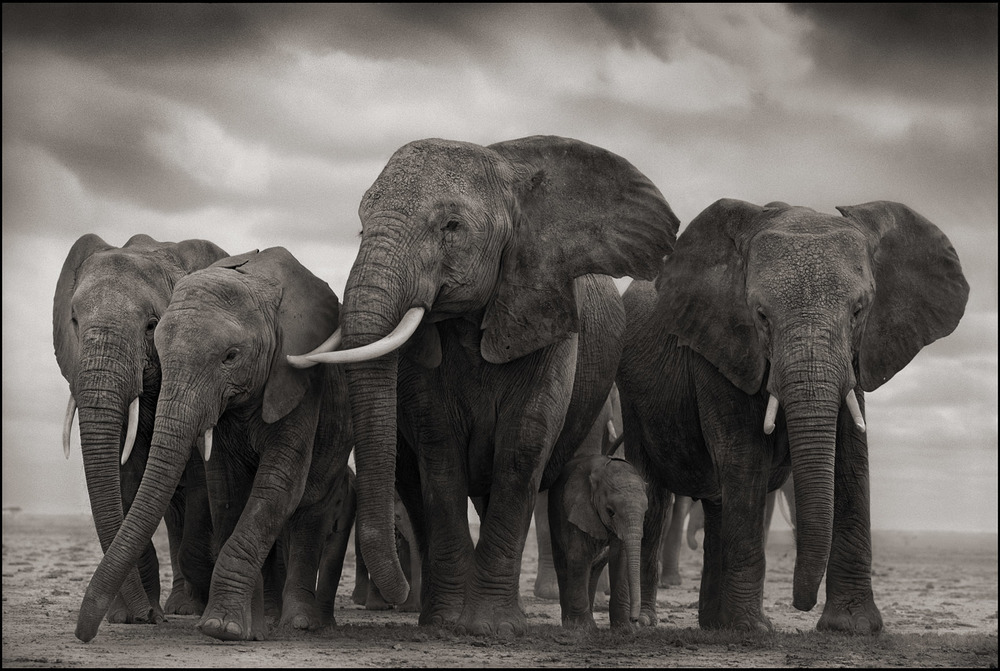 OKC's goal was to lose the weight equivalent to 100 elephants. Photo courtesy Nick Brandt Photography