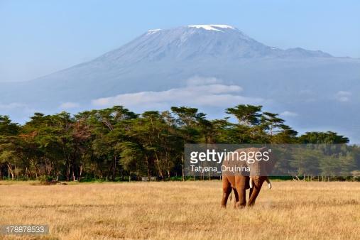 Photo by Tatyana_Drujinina/iStock / Getty Images