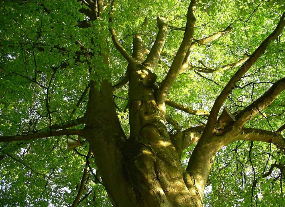 Singing_Tree_LookingUp.jpg