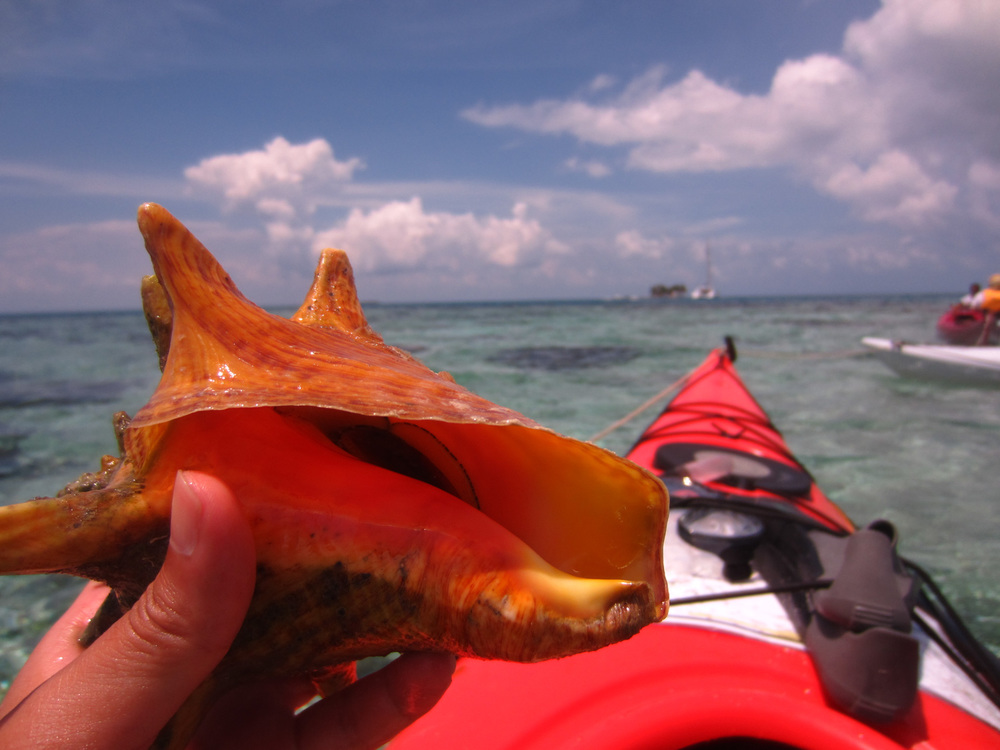 conch above water