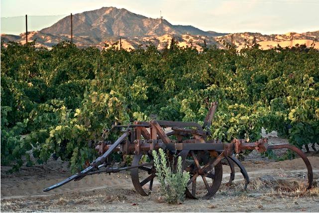 evanghelo vineyard.jpg