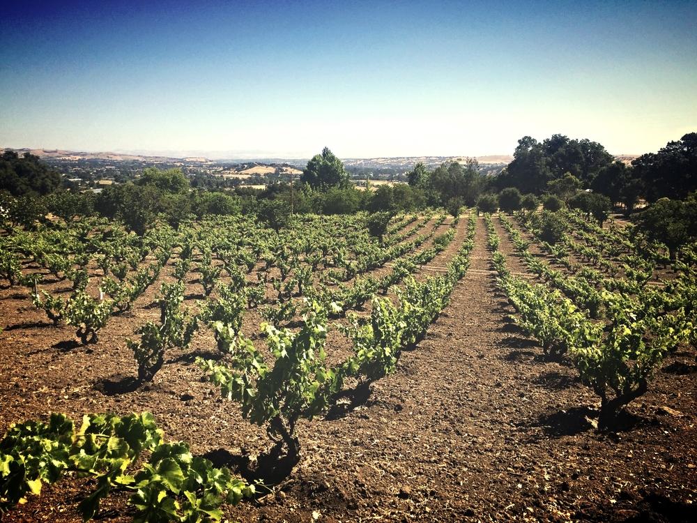 Amadeo's old vine Zinfandel