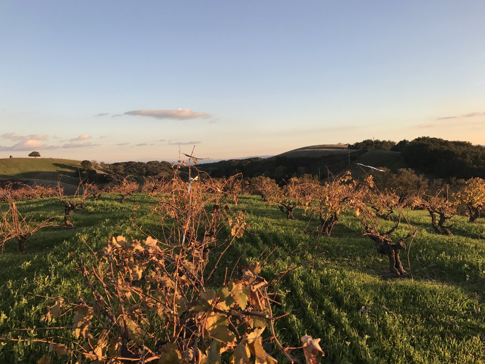 Ueberroth vineyard at sunset.jpg
