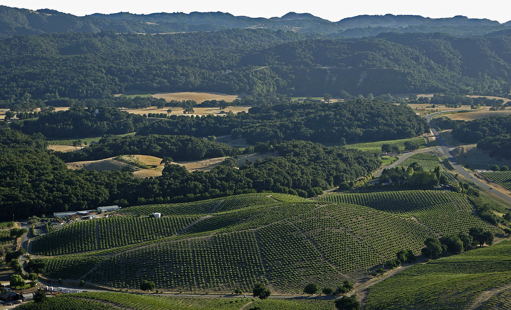 Aerial view of the Pesenti Vineyard, uniquie for its aspect-oriented blocks.