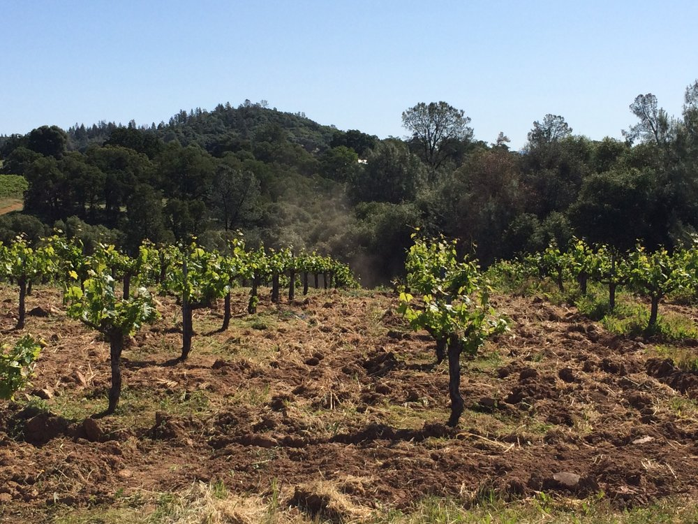 Cobb Vineyard - Sierra Foothils.JPG