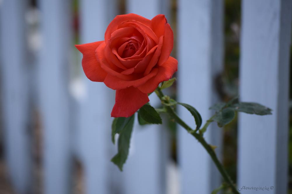 flower26.jpg