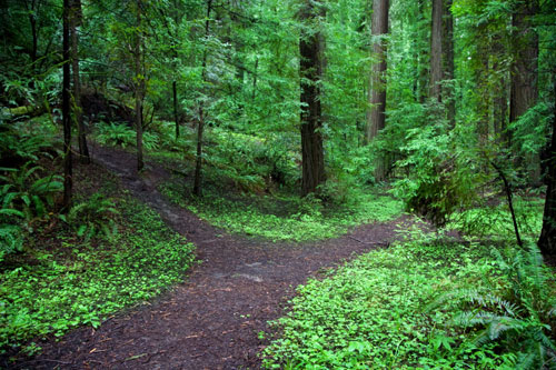 path-in-forest.jpg
