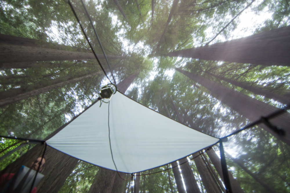 CR0A9391_CALIFORNIA_REDWOODS_TENT_LOOKINGUP.jpg