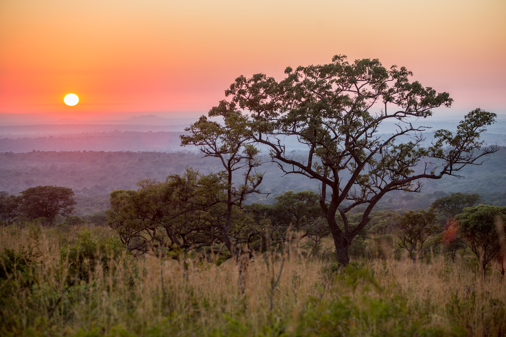 CR0A8443_SOUTHAFRICA_KRUGER_TREE_SUNRISE.jpg