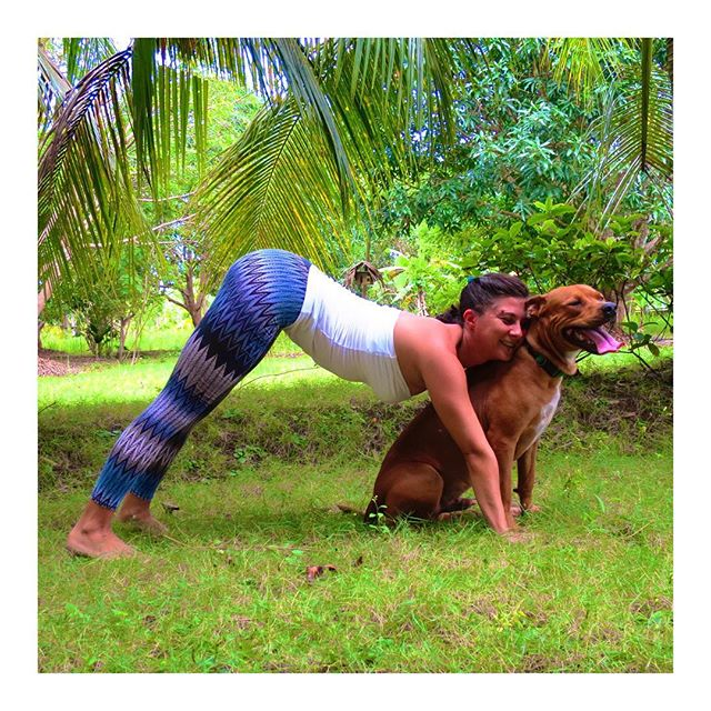 🔅behind the scenes🔅 trying to strike a good #downwarddog to publish on the website, and here he comes sneaking  under my belly, my little puppy boy Shiva, to make the picture so much better! Look how happy he looks to be in front of the camera helping me out 💕 #dog #adhomukhavrksasana #ilovedogs #pitbull #rottweiler #gratitude #happy #yoga #yogastudent #yogateacher #yogaeverywhere #yogaeverydamnday #yogajunkie #yogawithdogs #garden #tropics #tropicalgarden #meandmyhuman #joy #sundayyoga #afterlight